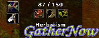 GatherNow